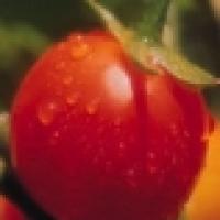Image of Artichoke Tomato Side Dish Recipe, Group Recipes