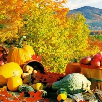 Image of Autumn Harvest Soup Recipe, Group Recipes