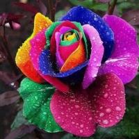 rainbowcookin